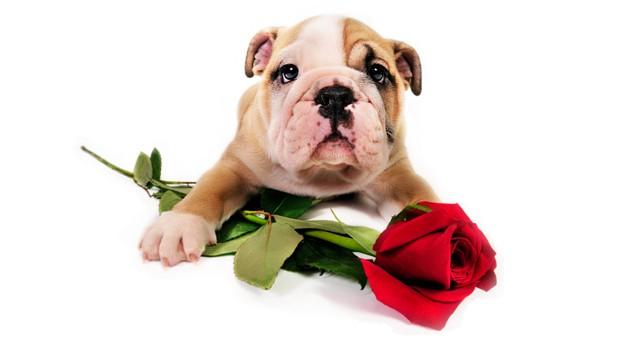 _valentines