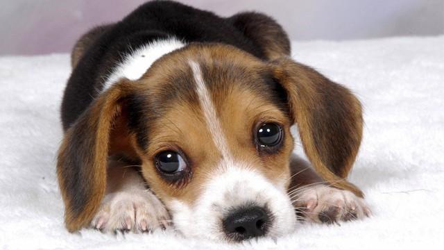 puppy222