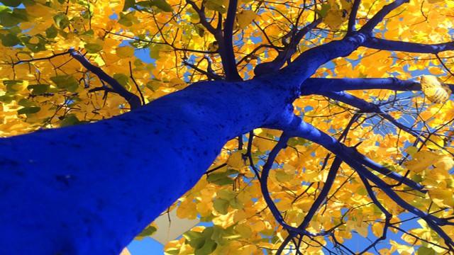 insauga-bluetrees