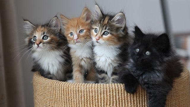 800px-4_kittens
