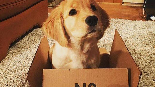 amazondog