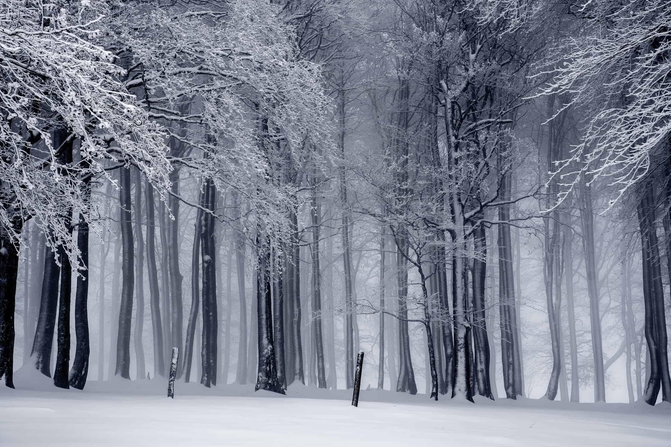 wintertrees1