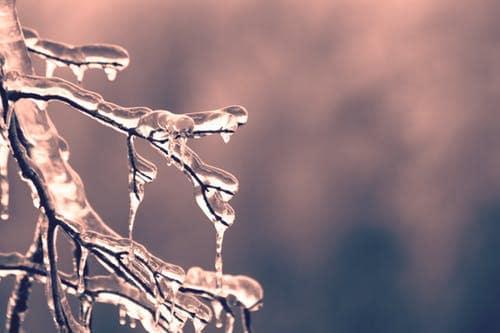 frost_warning