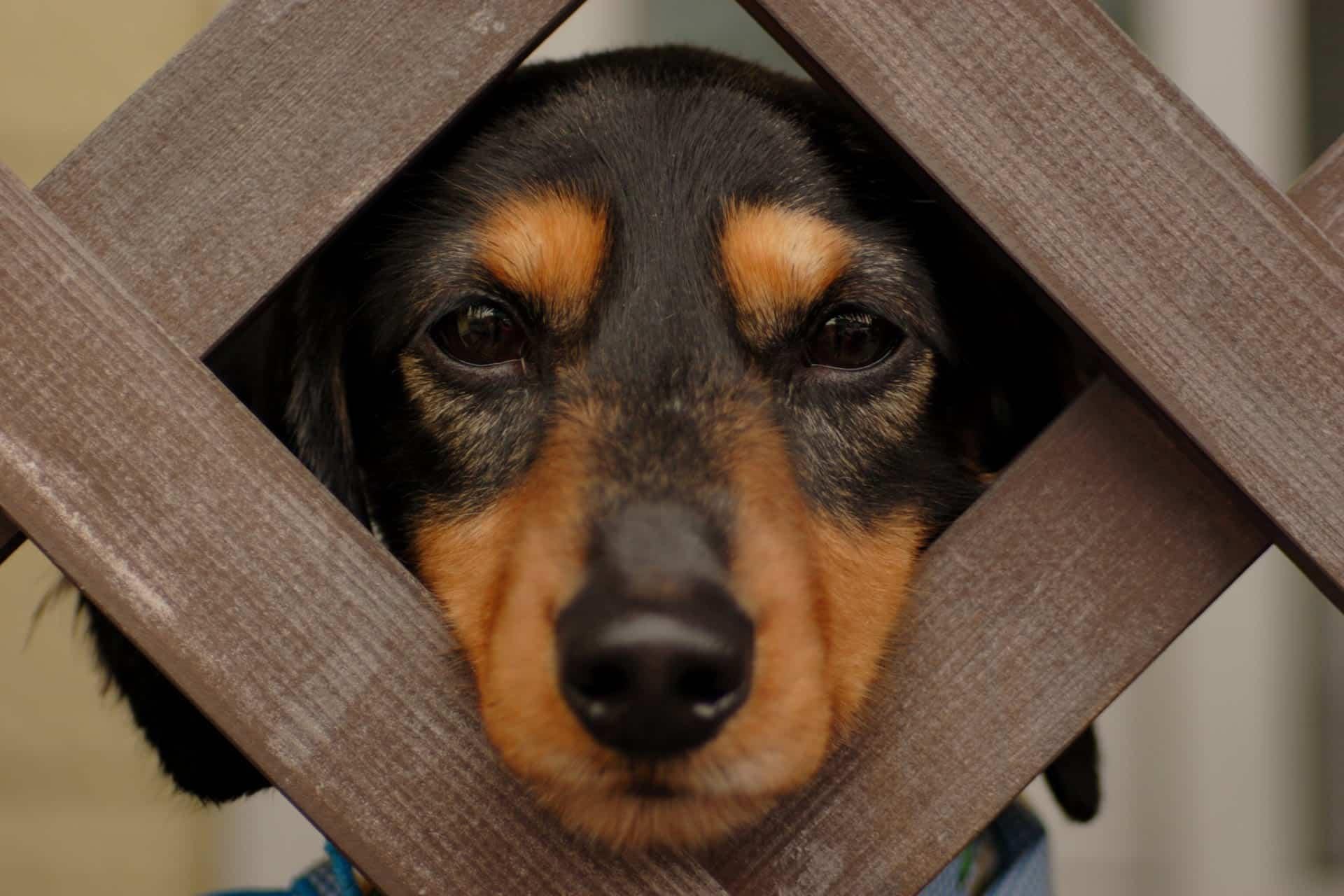 funny_dog_hamilton