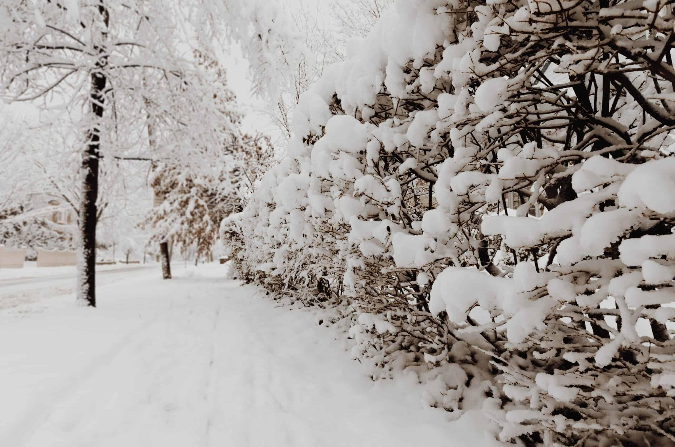 snow_burlington