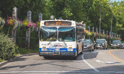 brampton_bus