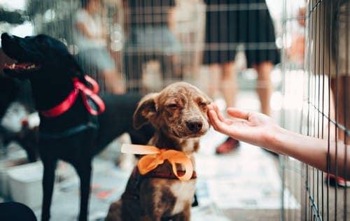 brampton_animal_shelter
